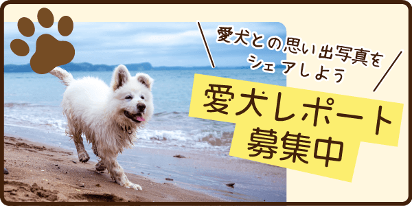 愛犬レポート