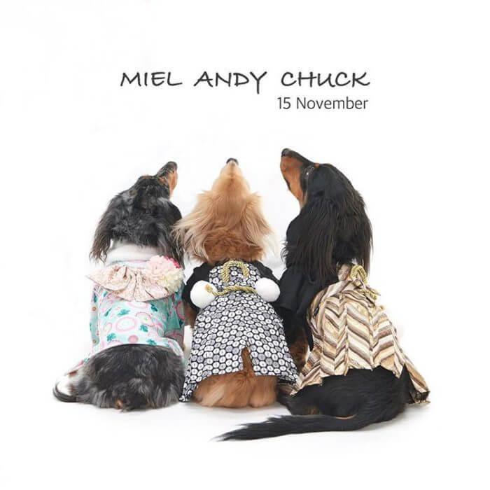 愛犬レポート:Miel、Andy、Chuck