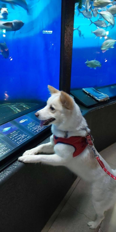 愛犬レポート:こうめ