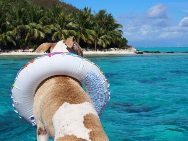 ペットとお出かけ、海・ビーチに海水浴
