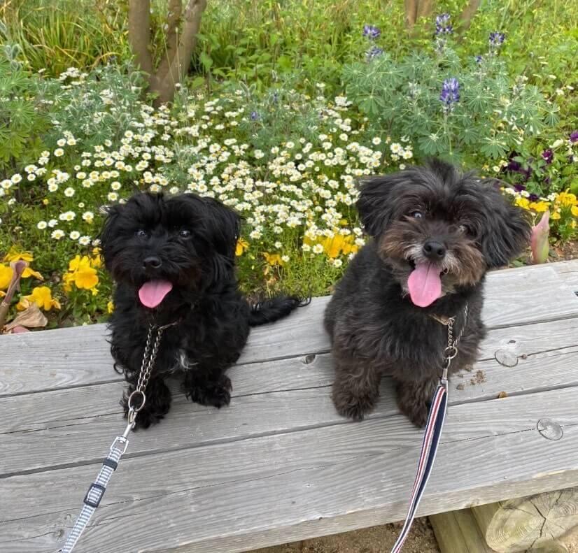 愛犬レポート:ジュリ・リン、寺ヶ池公園