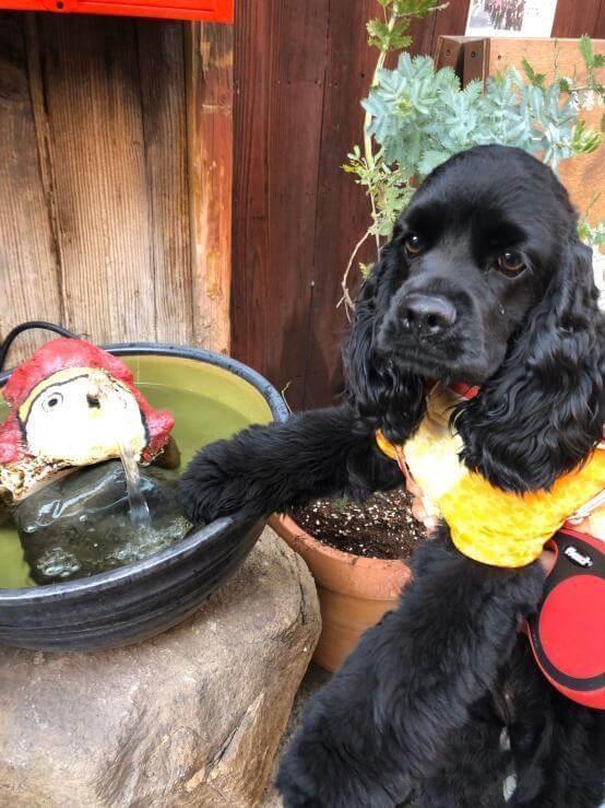 愛犬レポート:コロン、鞆の浦