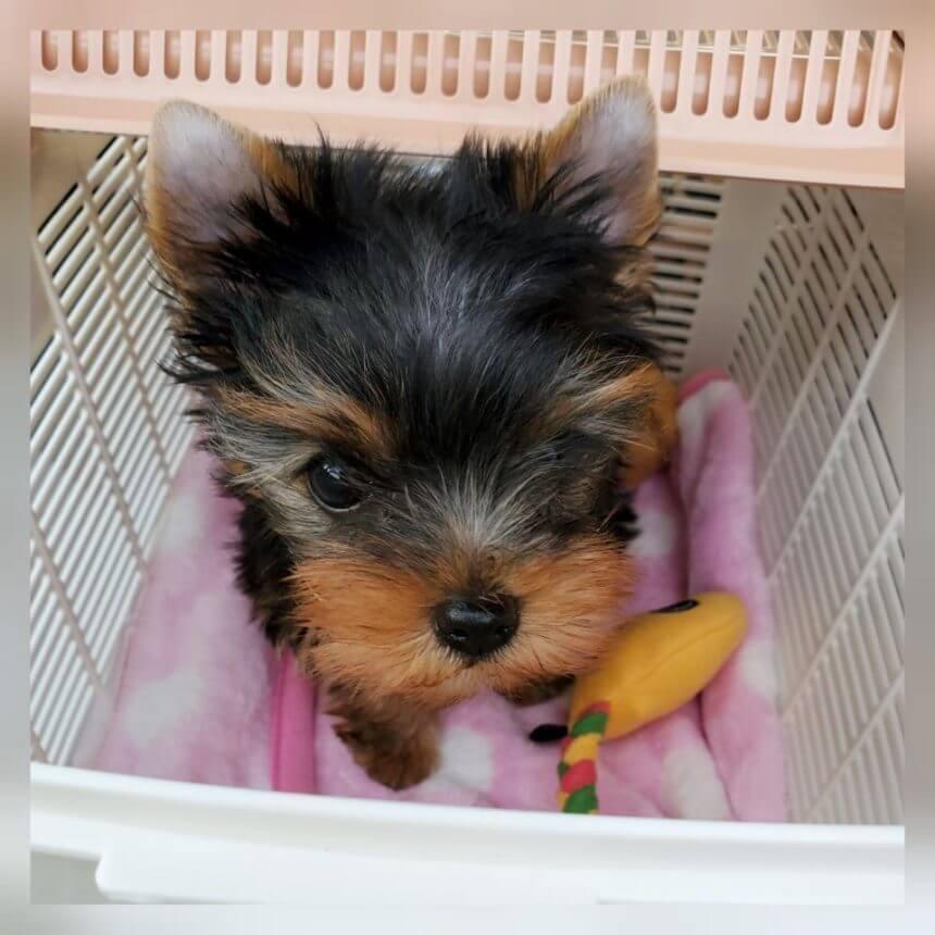 愛犬レポート:Malili(マリリ)