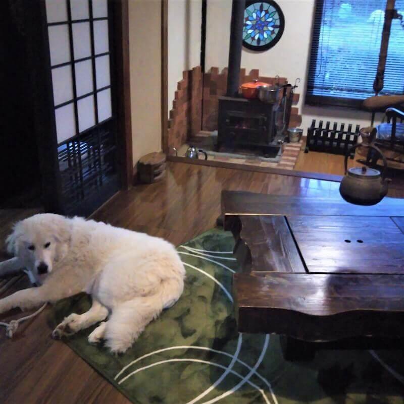 愛犬と泊まる100年古民家一棟貸し のぼりや