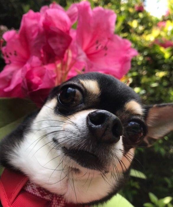 愛犬レポート:るる、大阪・ダム