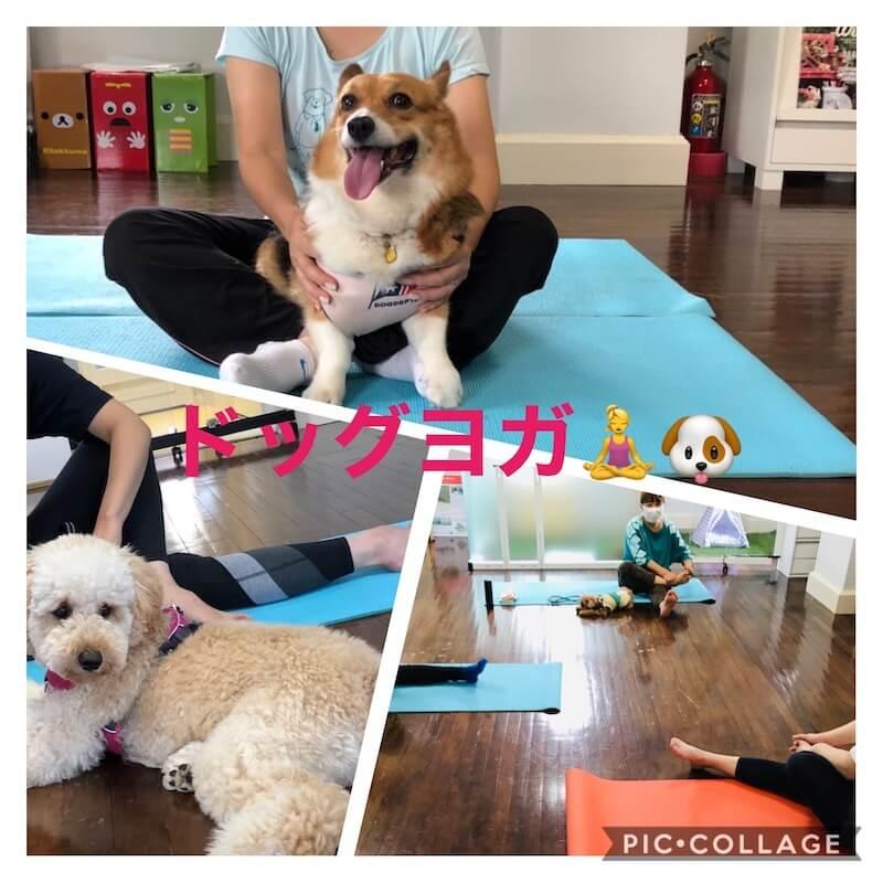 フォレストモモ成城店 ドッグヨガ
