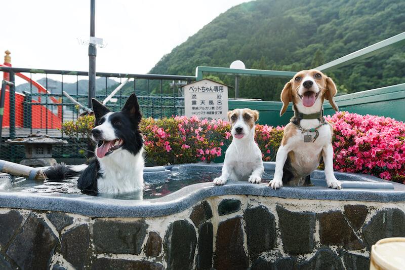 きぬ川国際ホテル ペット用露天風呂