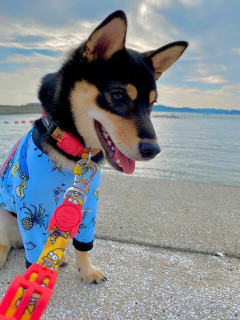 愛犬レポート:わかめ