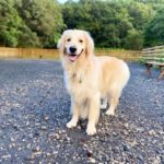 愛犬レポート:ミロ