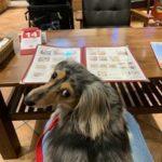 愛犬レポート:チョコ