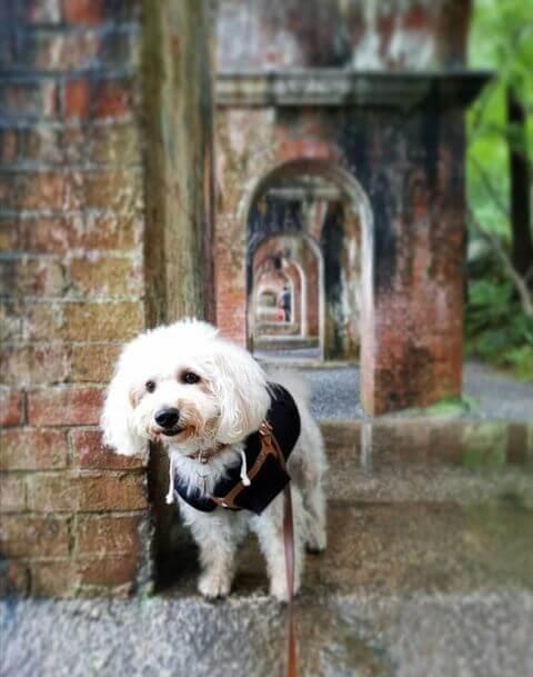 愛犬レポート:ハル