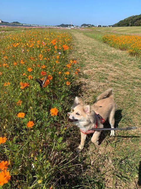 愛犬レポート:ひなた