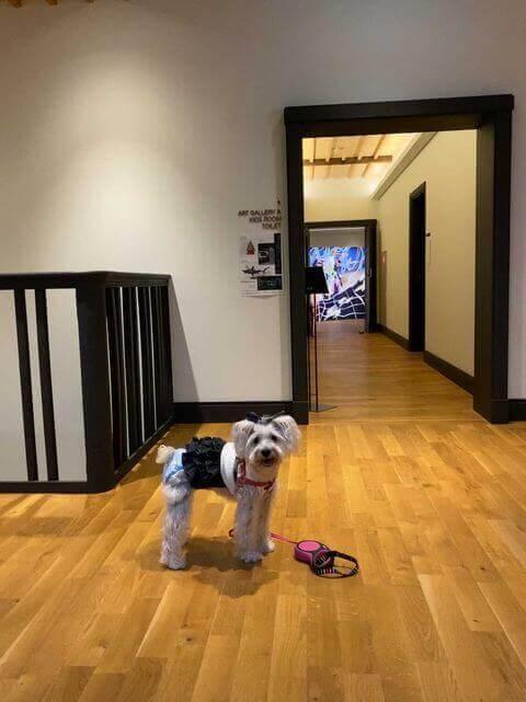 愛犬レポート:パール