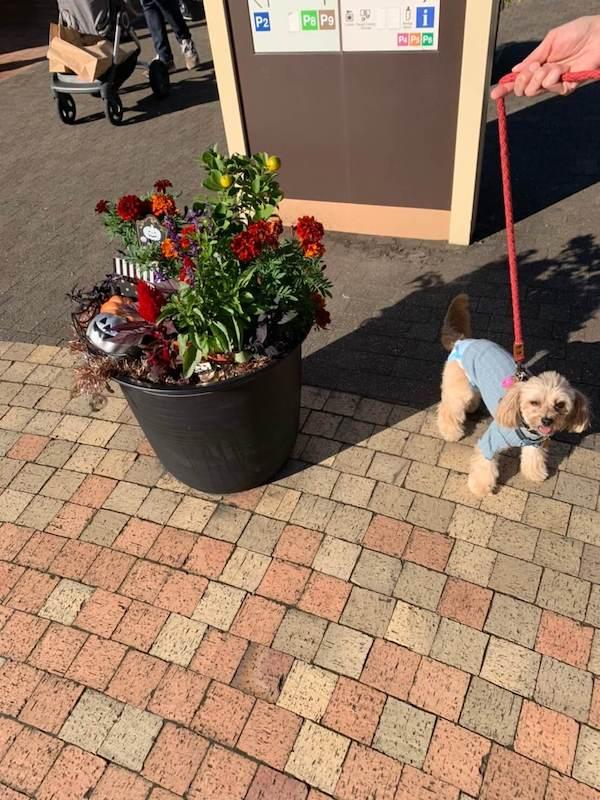 愛犬レポート:ハッピー