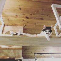 看板猫:ミア