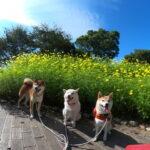愛犬レポート:パール、ベル、やまと