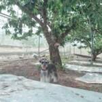 愛犬レポート:ルーク、山梨県、南アルプス市