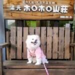 愛犬レポート:麦、北湯沢温泉郷 湯元 ホロホロ山荘
