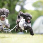 愛犬レポート:ララ・モカ、鶴見緑地公園