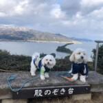 愛犬レポート・こてつ・マロン・京都府宮津市・天橋立ビューランド・股のぞき台