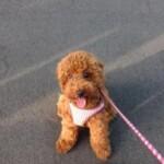 愛犬レポート:ヒナタ