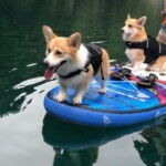 愛犬レポート:ハナ、ナナ